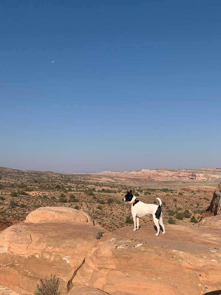 Kelly the black and white dog on a rock in the high desert outside Moab, Utah
